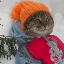 Funny Cat Calendar