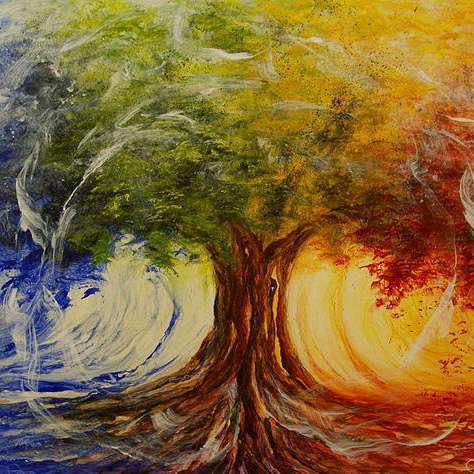 Trees stripped of bark to produce hallucinogencic drug - Shroomery