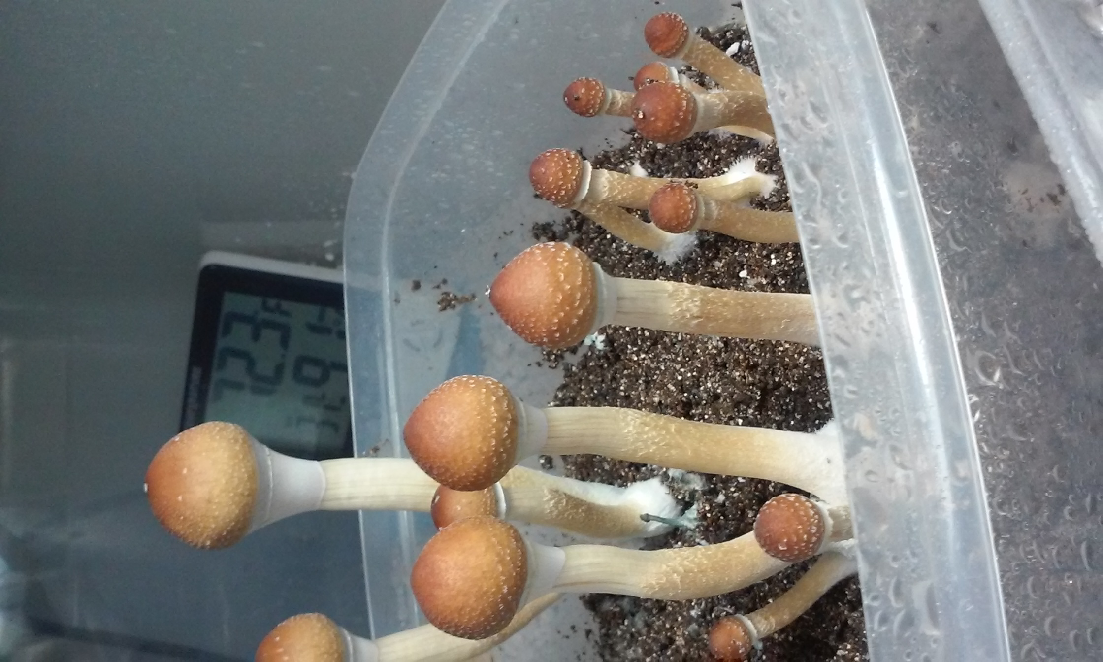 Beautiful second flush!