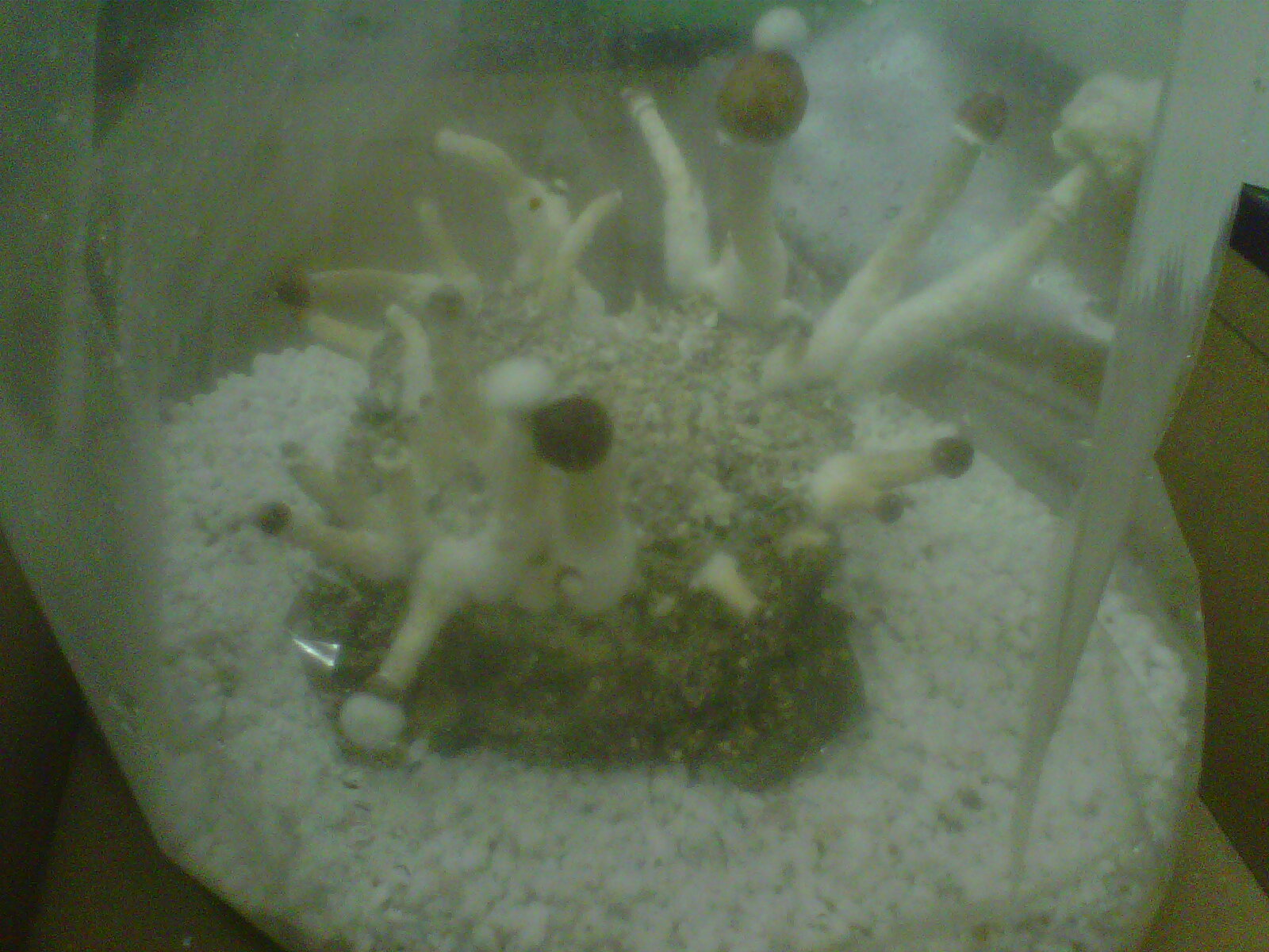 First attempt, first flush. Should be ready in a couple days