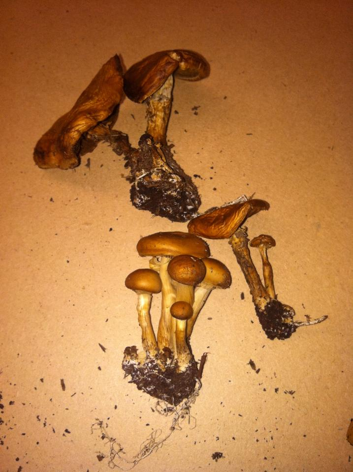 Cool Mushrooms