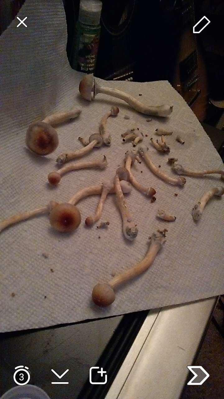 first flush good?