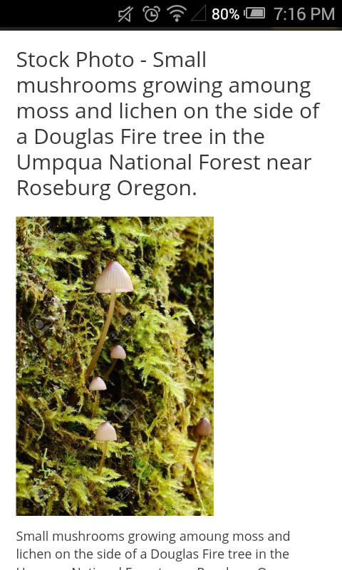 Small brown mushrooms