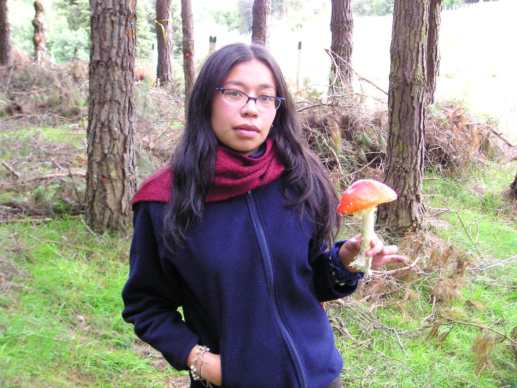 Amanita muscaria in a magic forest in Sumapaz Colombia