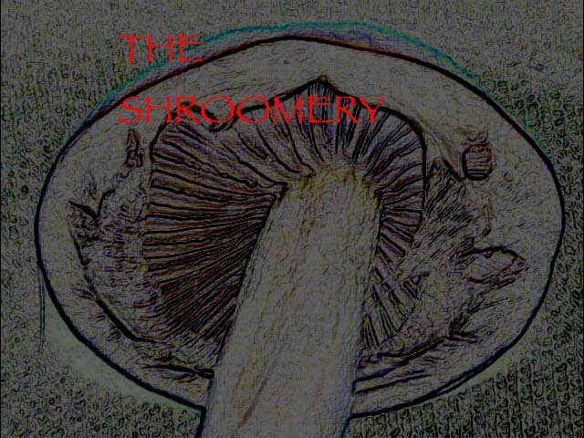 oldimages/18337/24932.jpg