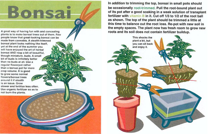 bonsai marijuana plants Quotes