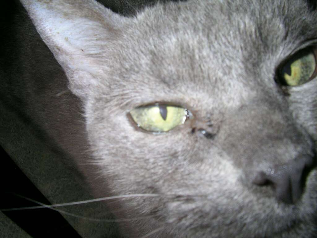 male cat urinary infection symptoms