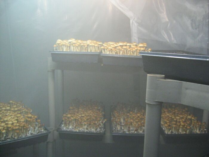 Making A Grow Room Few Q S Any Help Welcome Mushroom Cultivation Shroomery Message Board