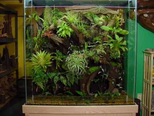 Custom Glass Terrarium