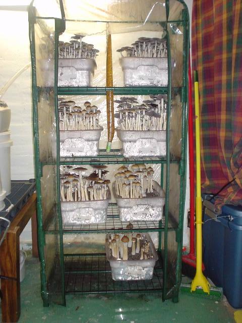 Martha Terrariums Vs Monotubs Mushroom Cultivation