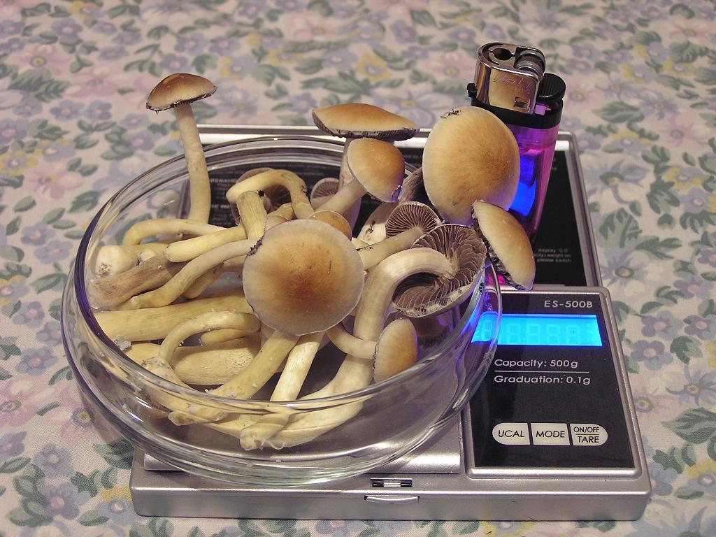Easiest way to regulate temperature in a closet  - Mushroom
