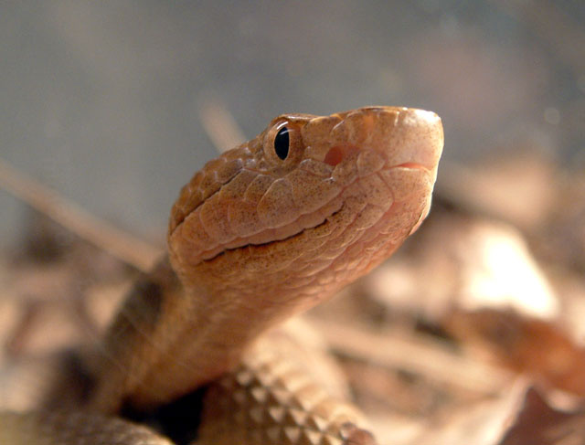Any reptile lovers out there? - The Pub - Shroomery Message