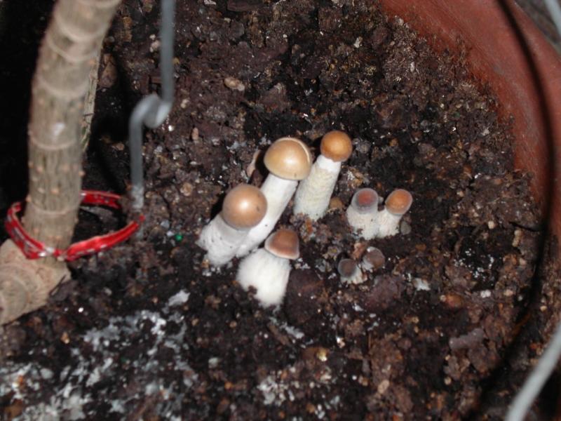 how to kill mushrooms in houseplants