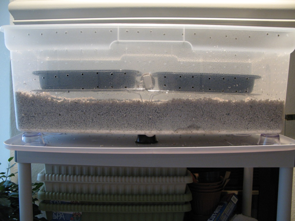 fish tank fruiting chamber......upside down???? - Mushroom Cultivation - Shroomery Message Board