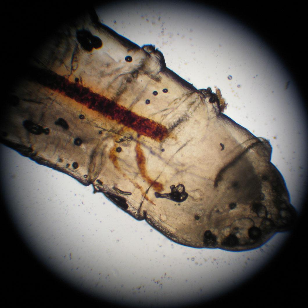Random Maggots On Kitchen Floor