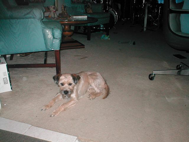 Dog Name Bodhi
