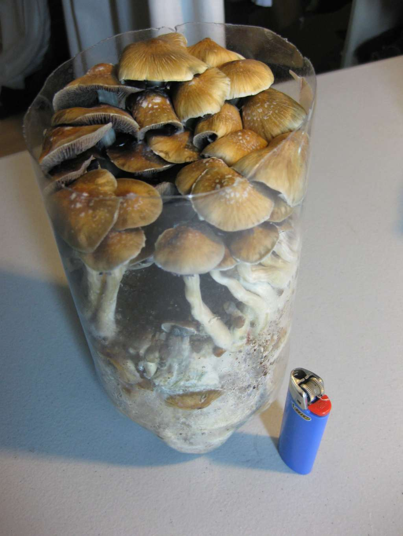 Spawning to bulk in a 2 liter soda bottle - Mushroom