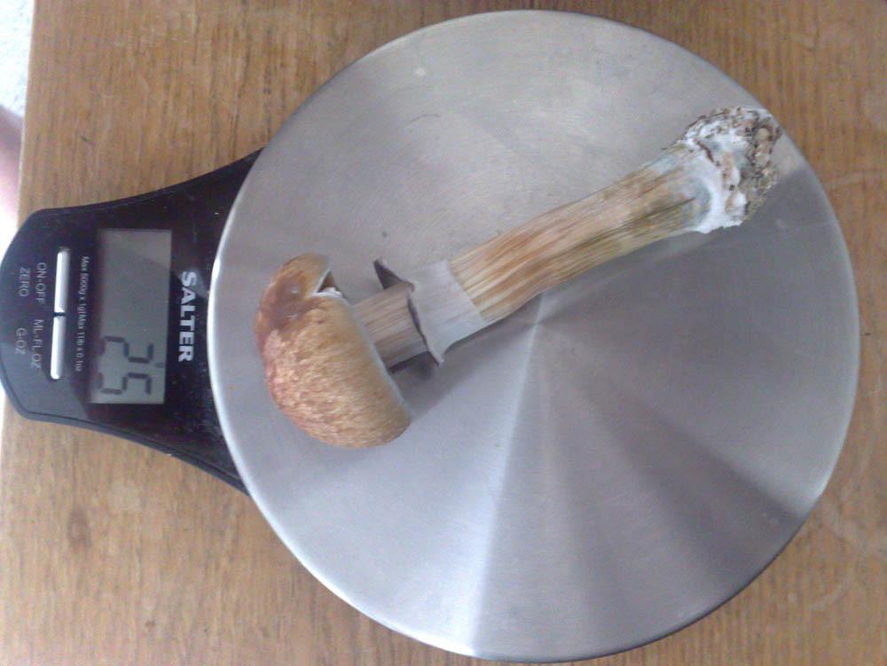 peat moss casing mix question - Mushroom Cultivation - Shroomery