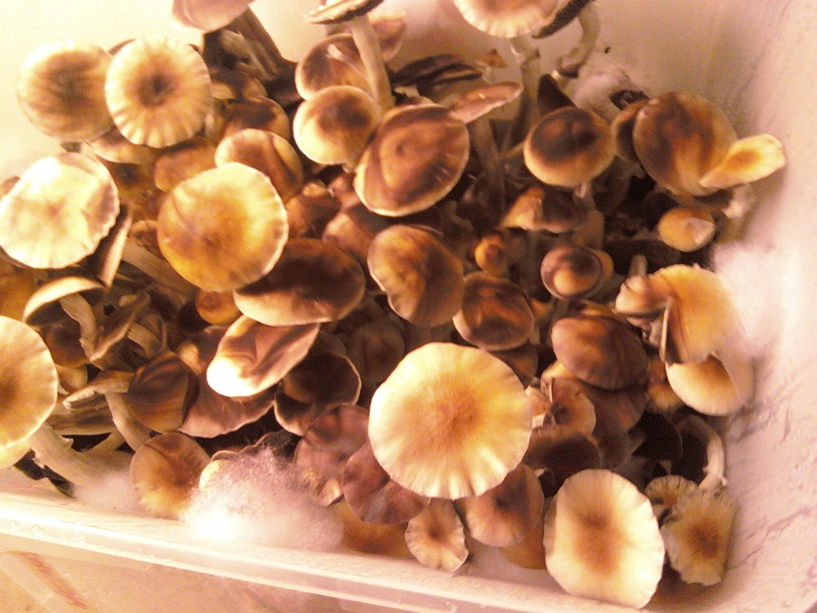information about mushroom cultivation