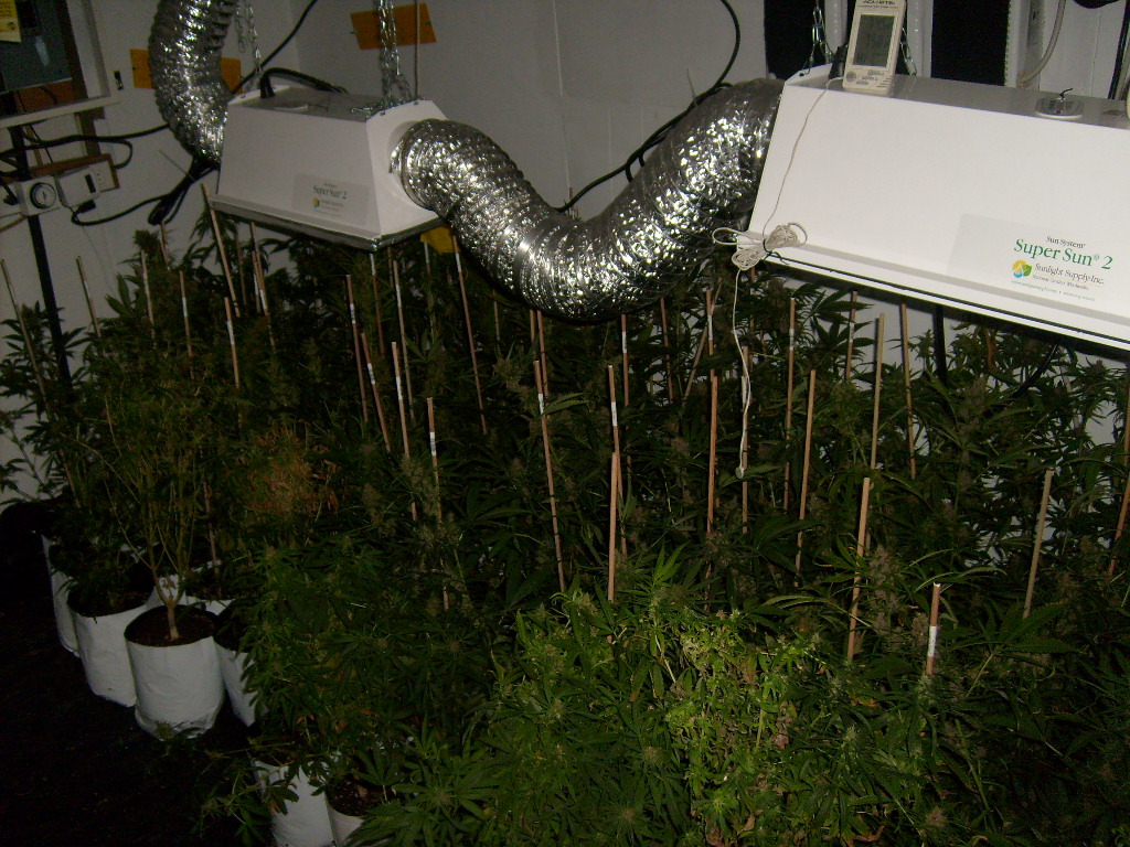 Setting Up A Grow Room Cannabis Cultivation Growery
