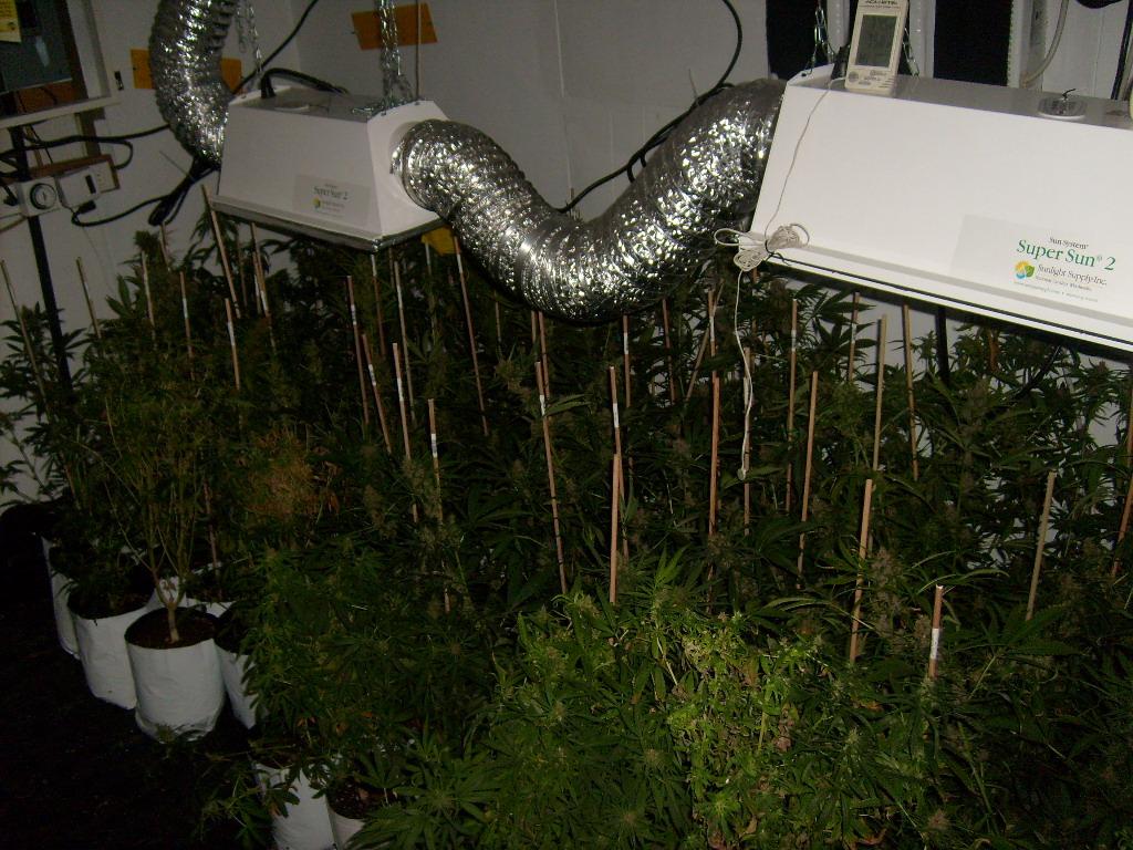 Watt Grow Room Design