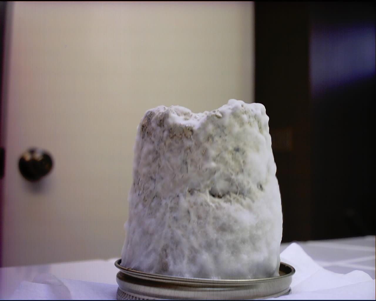 Fuzzy Mycelium On Cakes