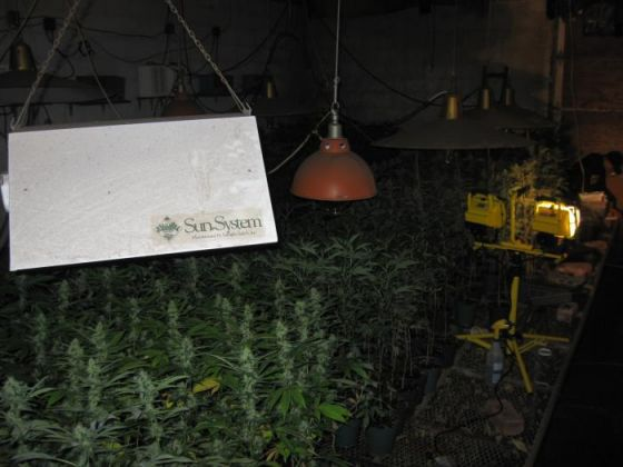 NY] Biggest drug bust in Greene County history