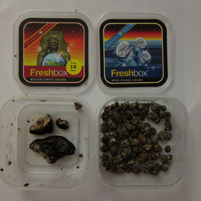 Mother's Finest Magic Truffles - has anyone tried them