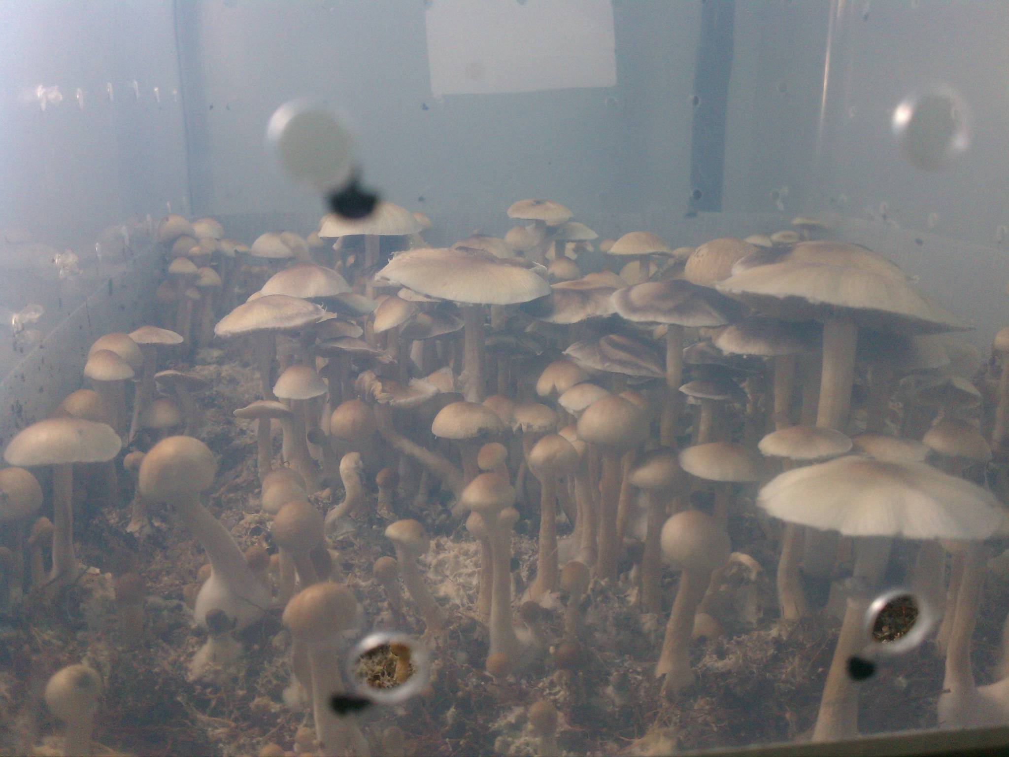 Mini Mono Tub update w/ pics - Mushroom Cultivation
