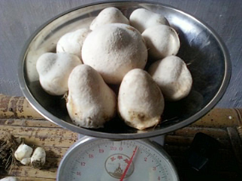 Paddy Straw Mushroom And Compost Questions Problems