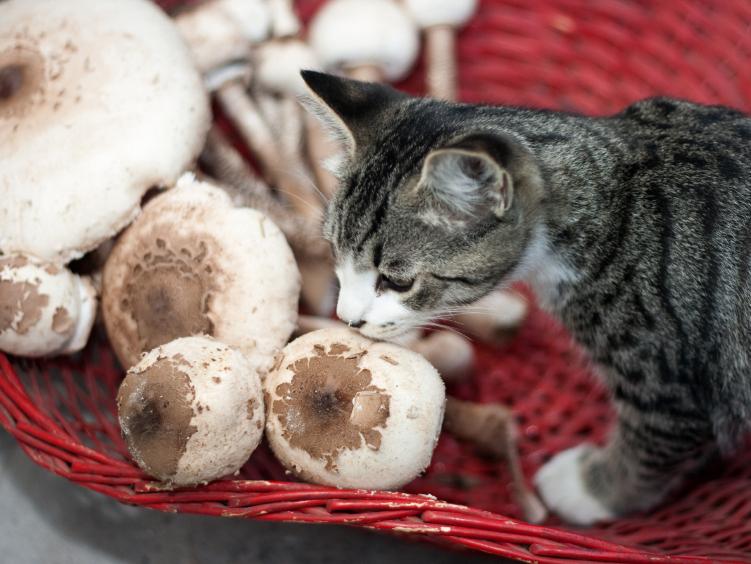 Crave Cat Food Coupon Code