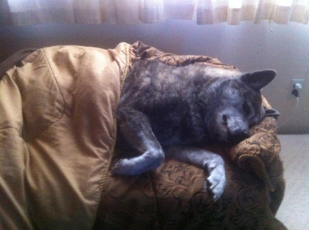 Register My Dog As A Service Dog