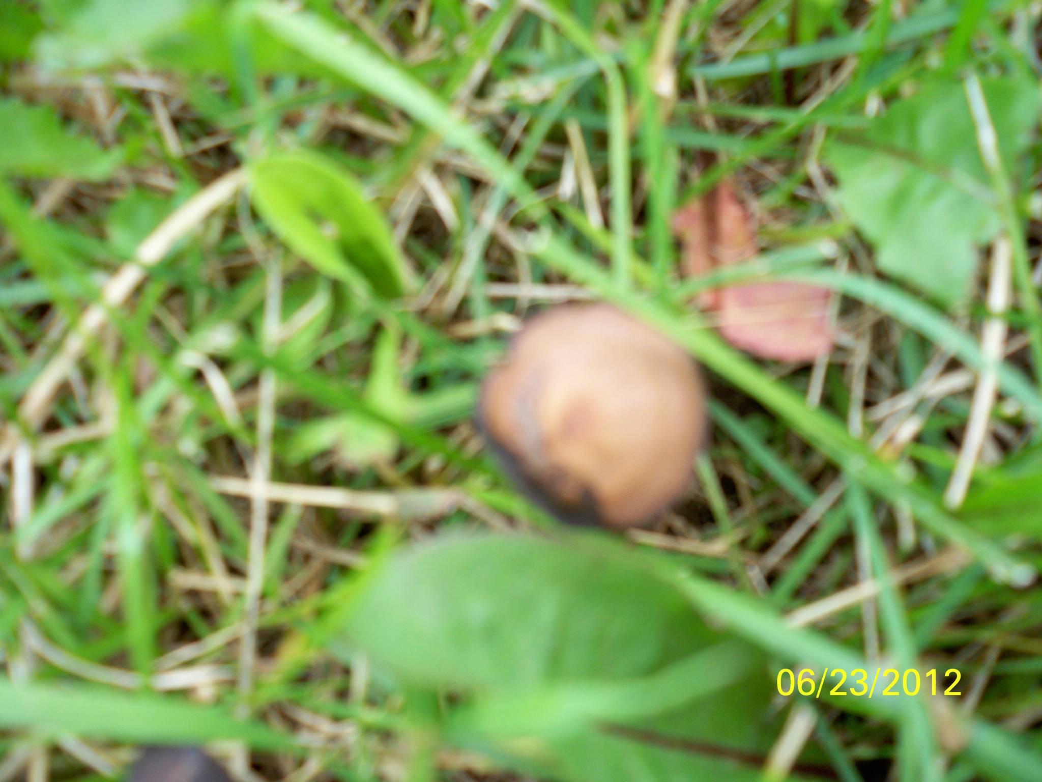 Mushroom ID Wisconsin - Mushroom Hunting and Identification