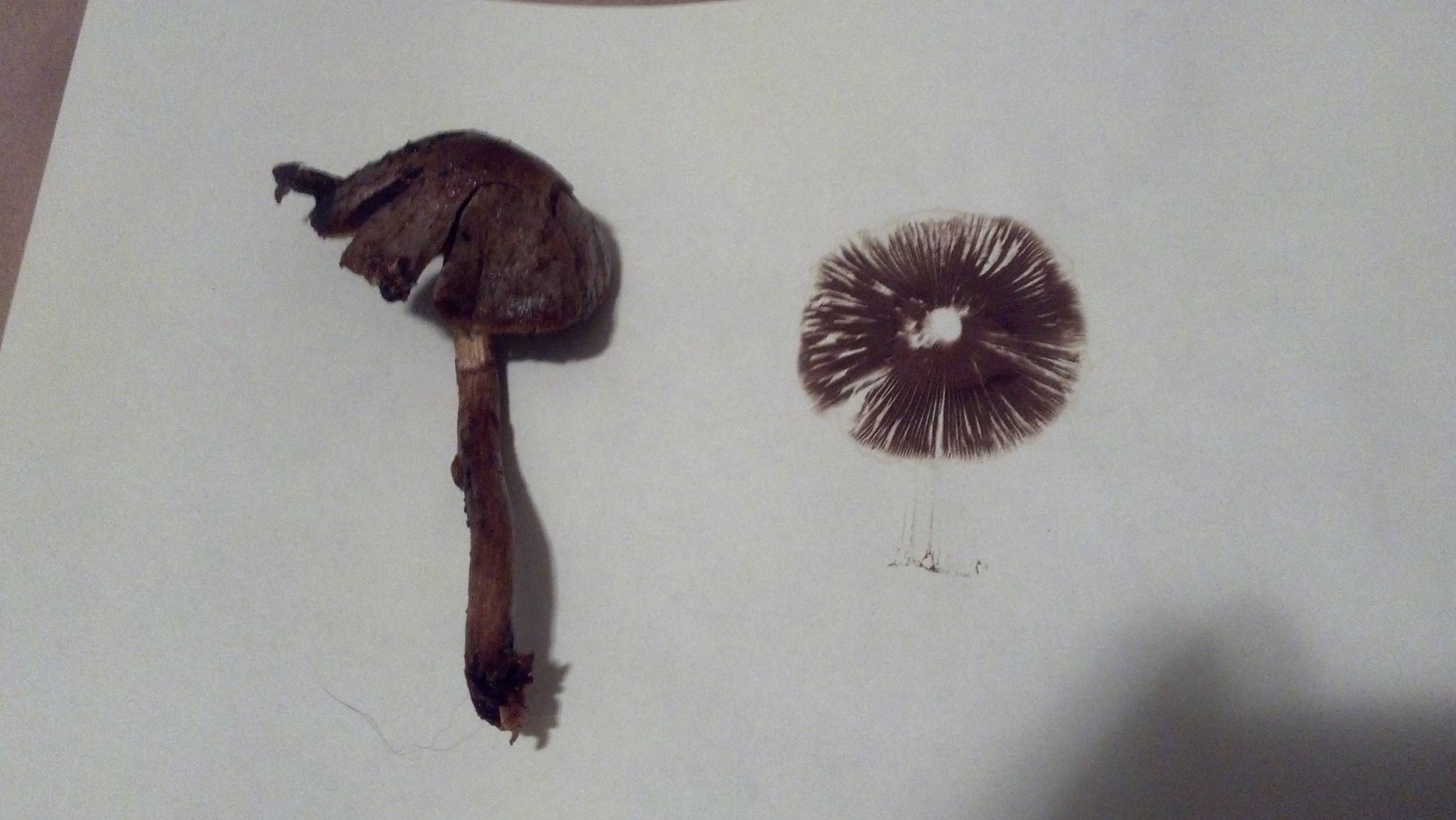 mushroom identification help mushroom hunting and identification