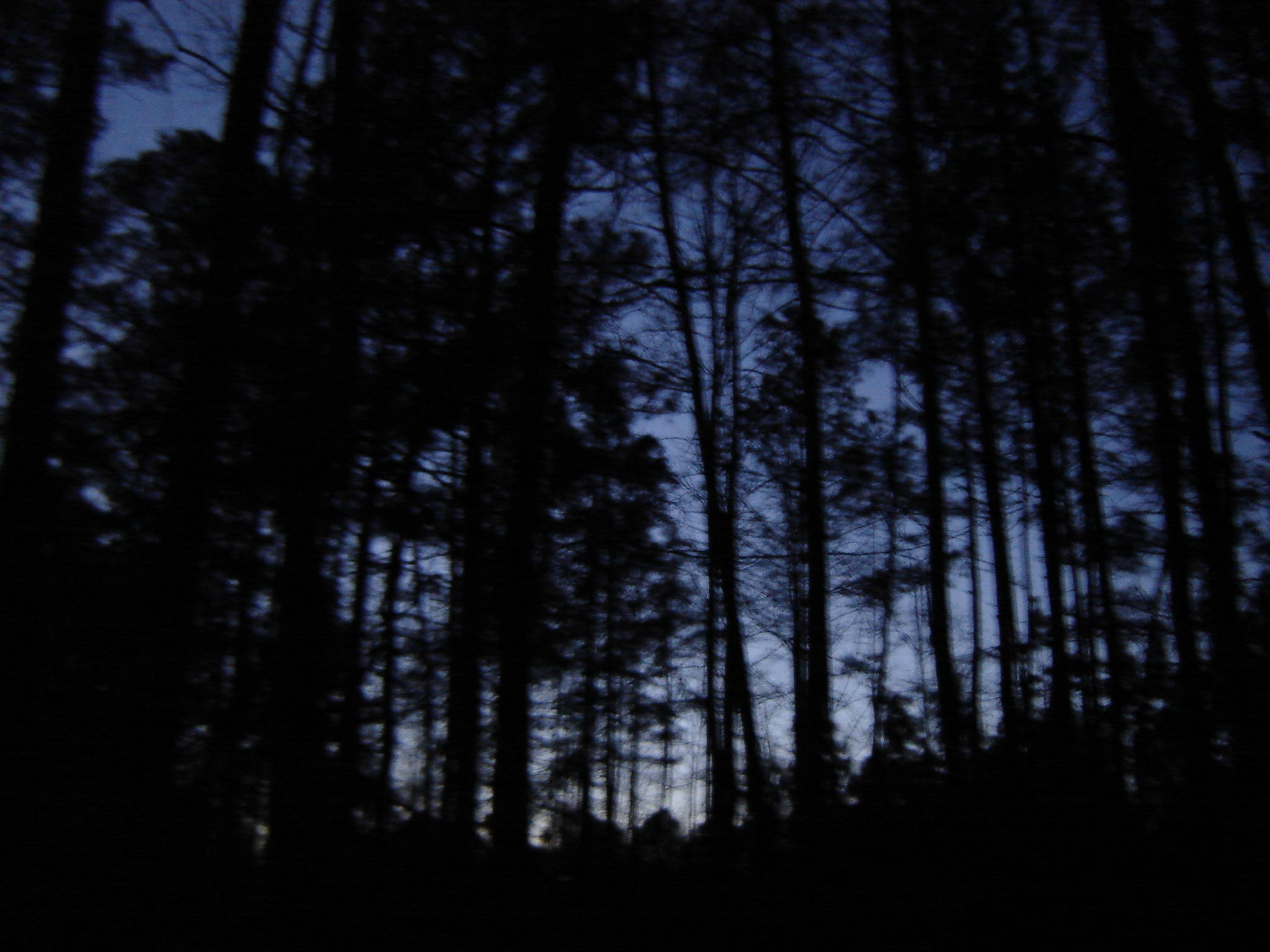 essay a forest at night time