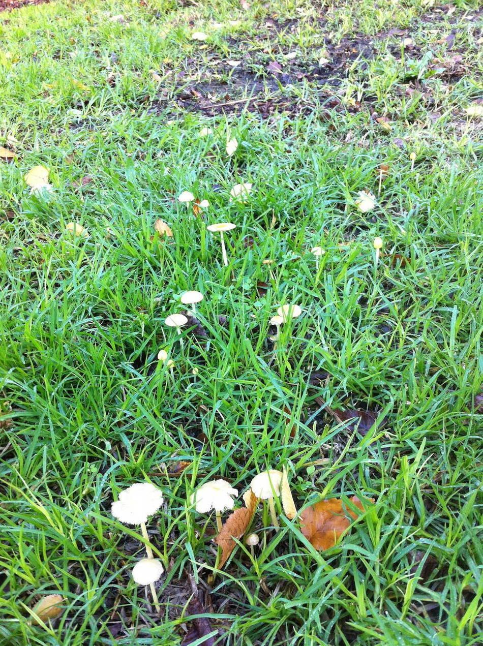 magic mushroom identification for - photo #27