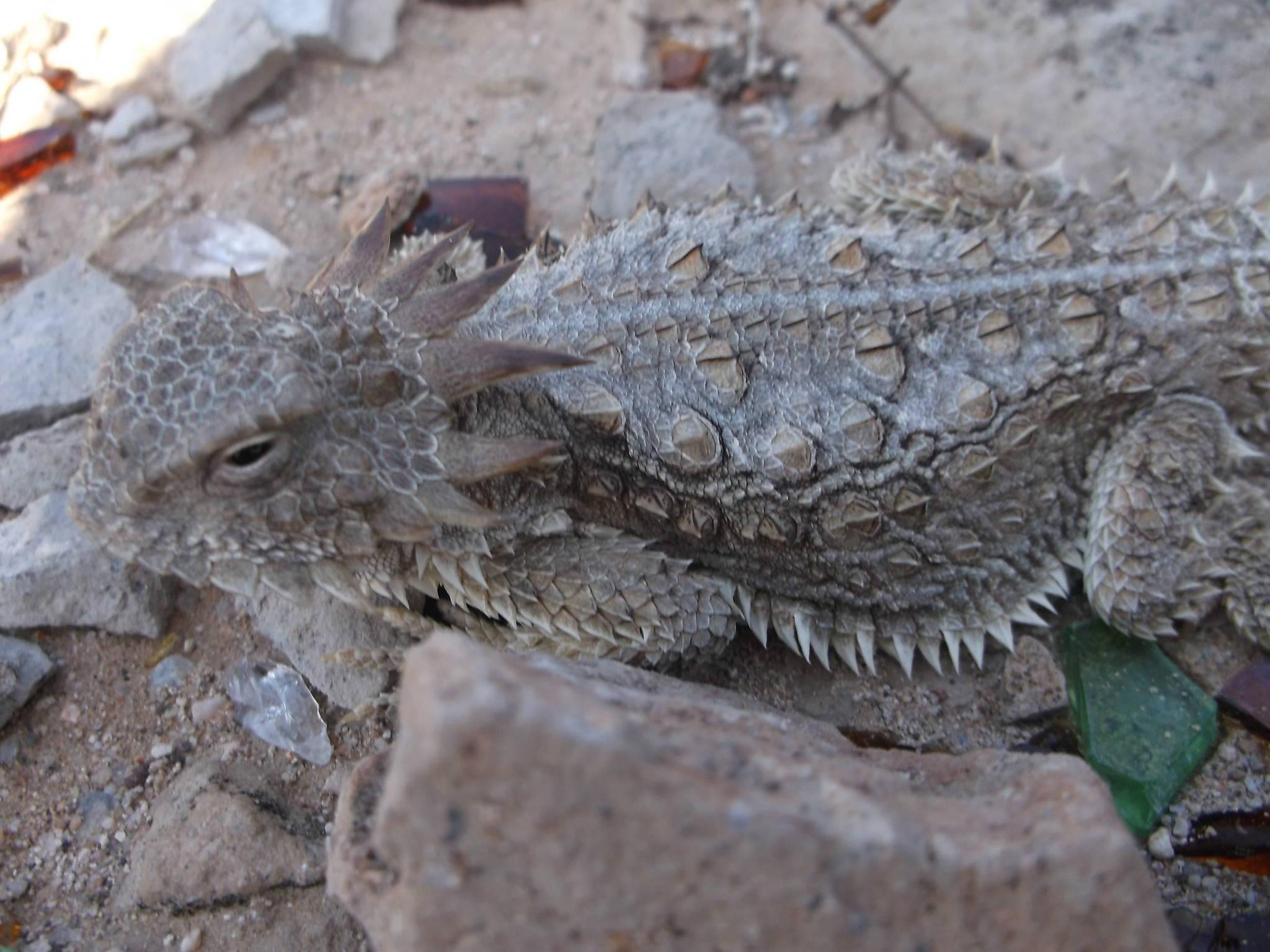 Big ass lizard