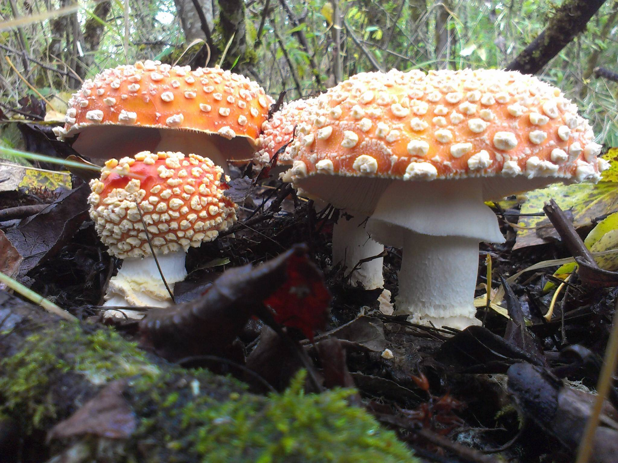 *Official PNW 2013 Active Finds* - Mushroom Hunting and ...