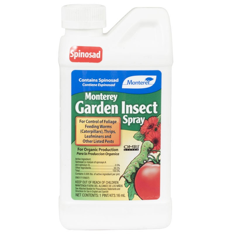 Insecticide To Kill Ants Uk Safe For Dogs