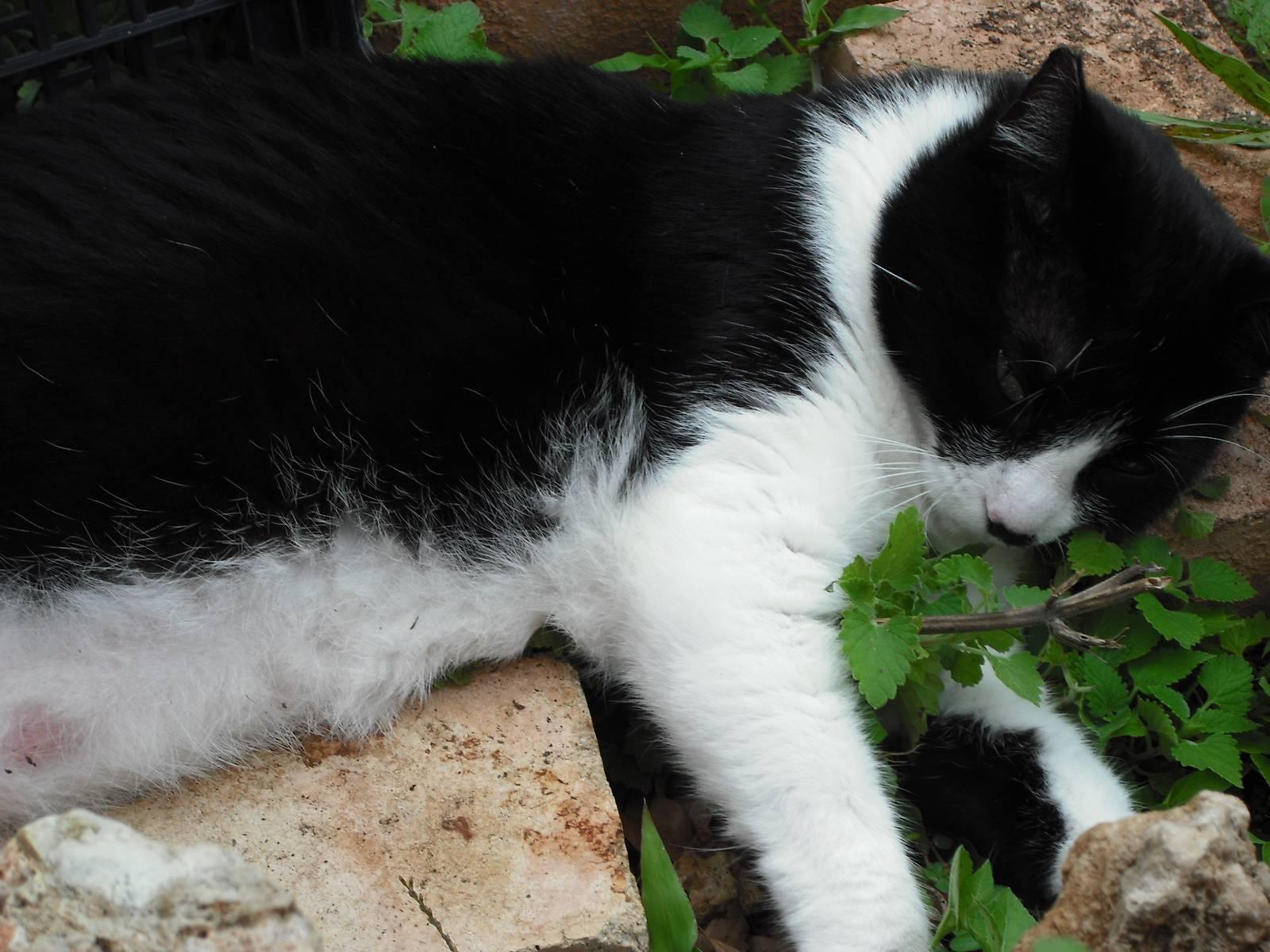 Cat Keeps Catching Voles