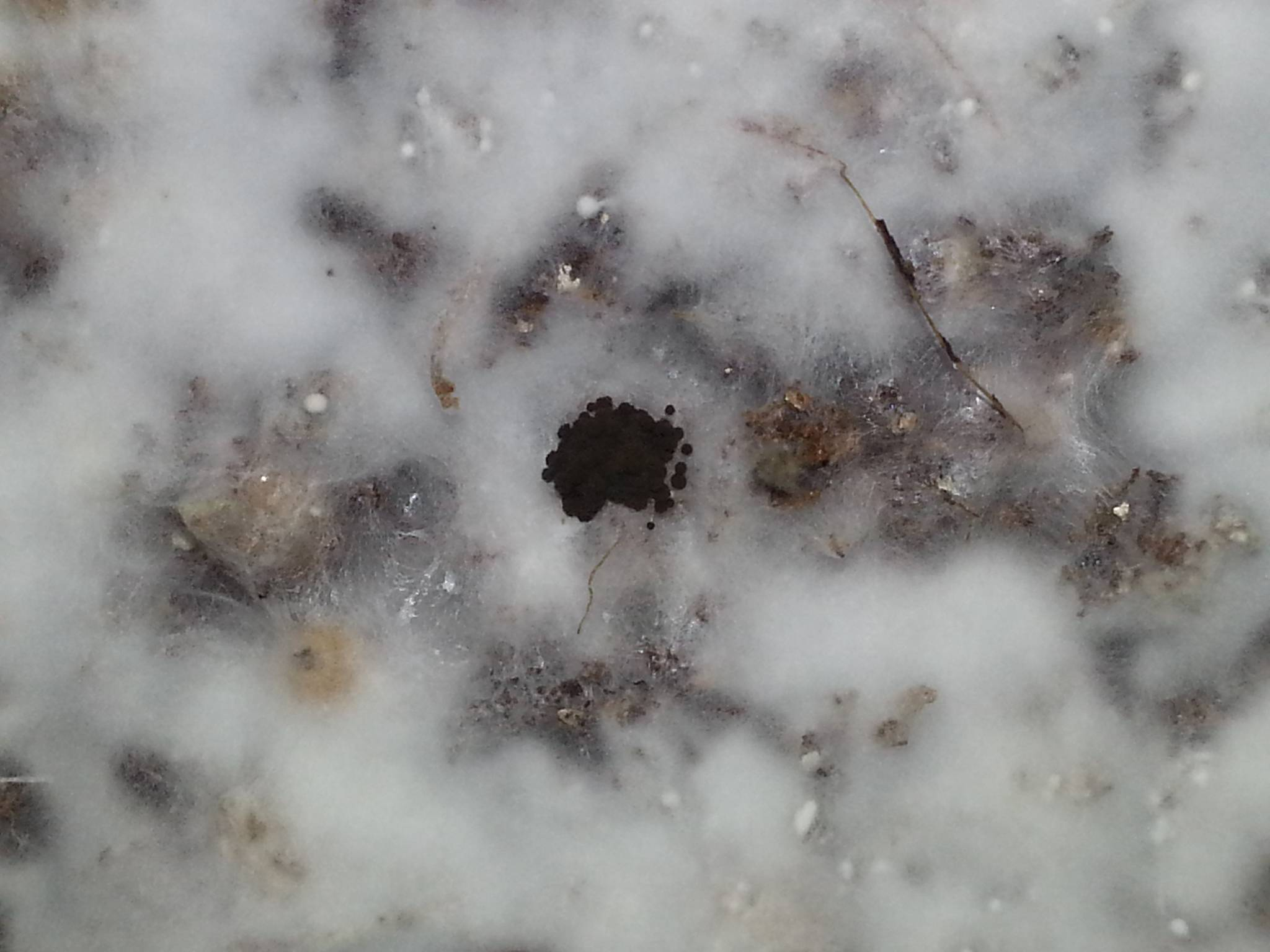 How to identify black mold - Hat Are These Small Black Dots They Don T Look Like Anything Ive Ever Seen It Looks Like A Little Pol Of Roach Poop Or Like Little Carbon Balls If You