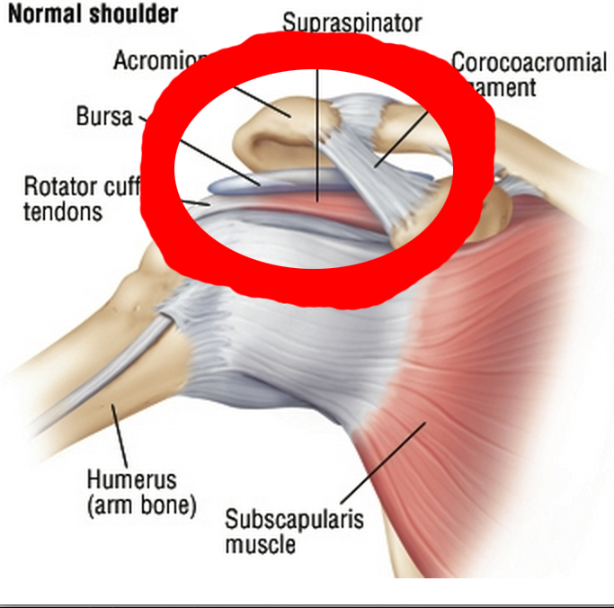 Shoulder Injury Physical And Mental Well Being Shroomery Message