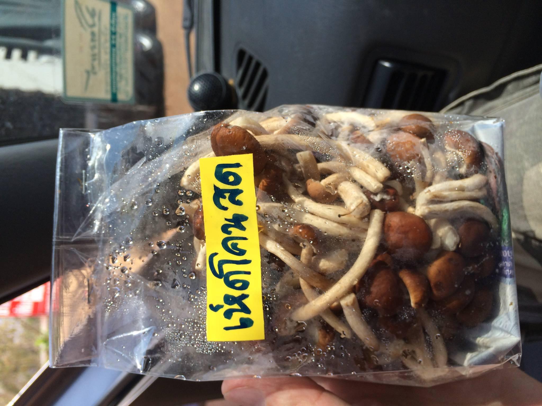 struer taxa nummer thai message