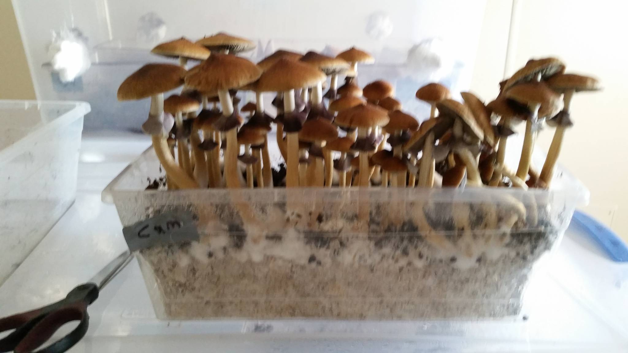 The stop buying grow kits thread!! - Mushroom Cultivation