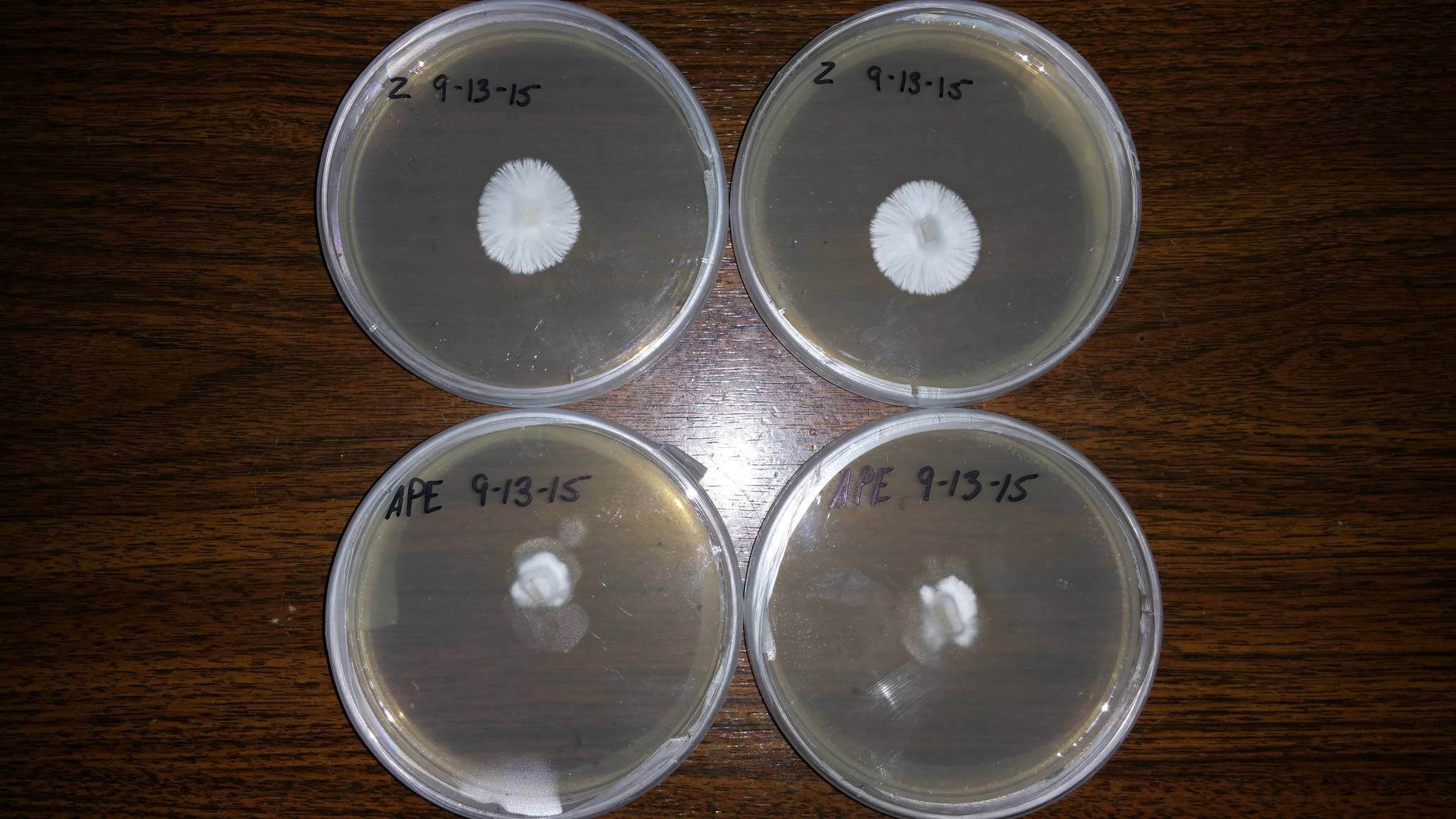 how to make agar plates shroomery