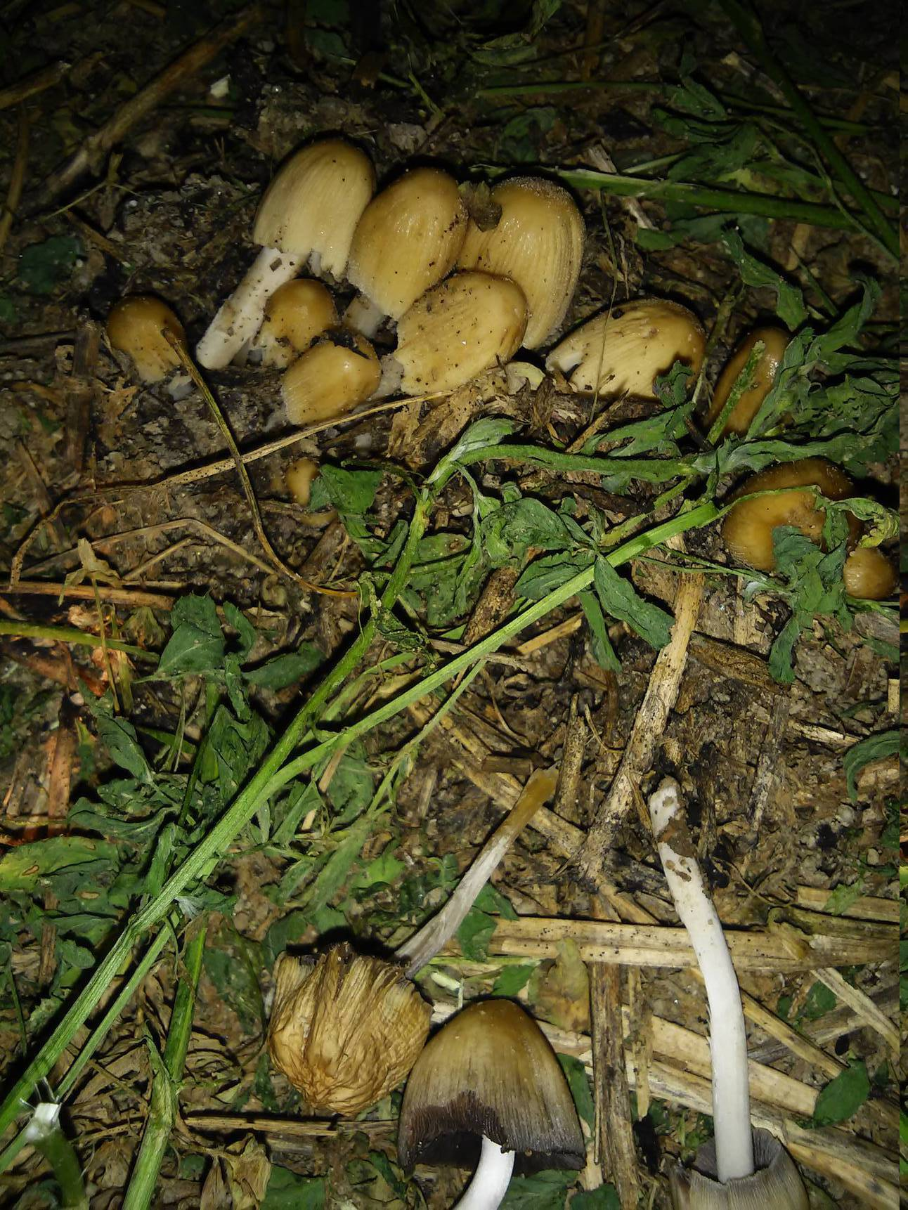 Sandy soil find 3 4 kinds mushroom hunting and for Where to find soil