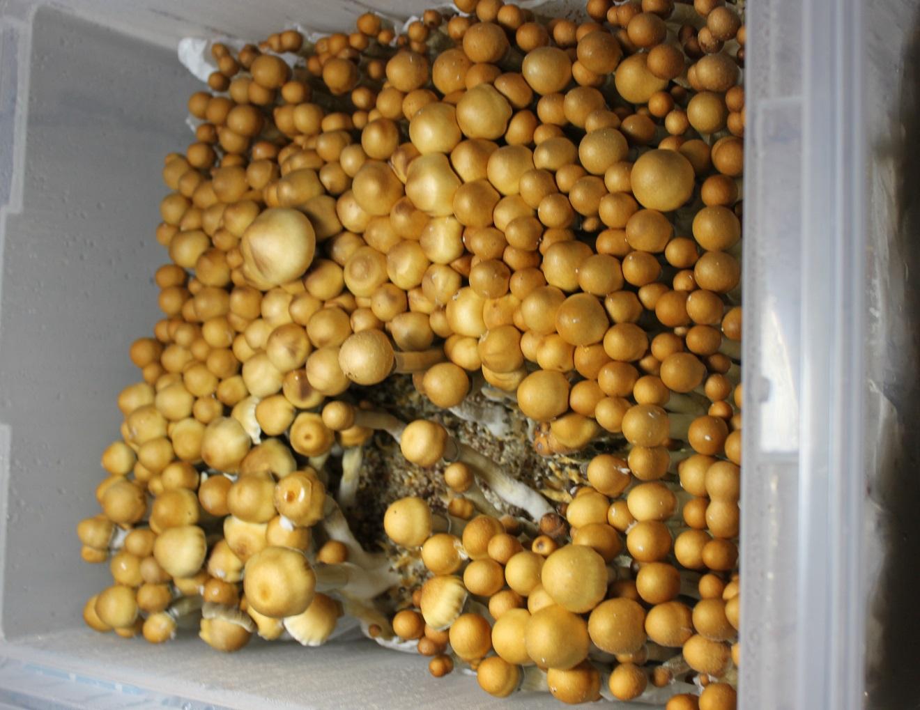 BOD\u0026#39;s Bucket TEK for Coir substrate (an adaptation of the ...