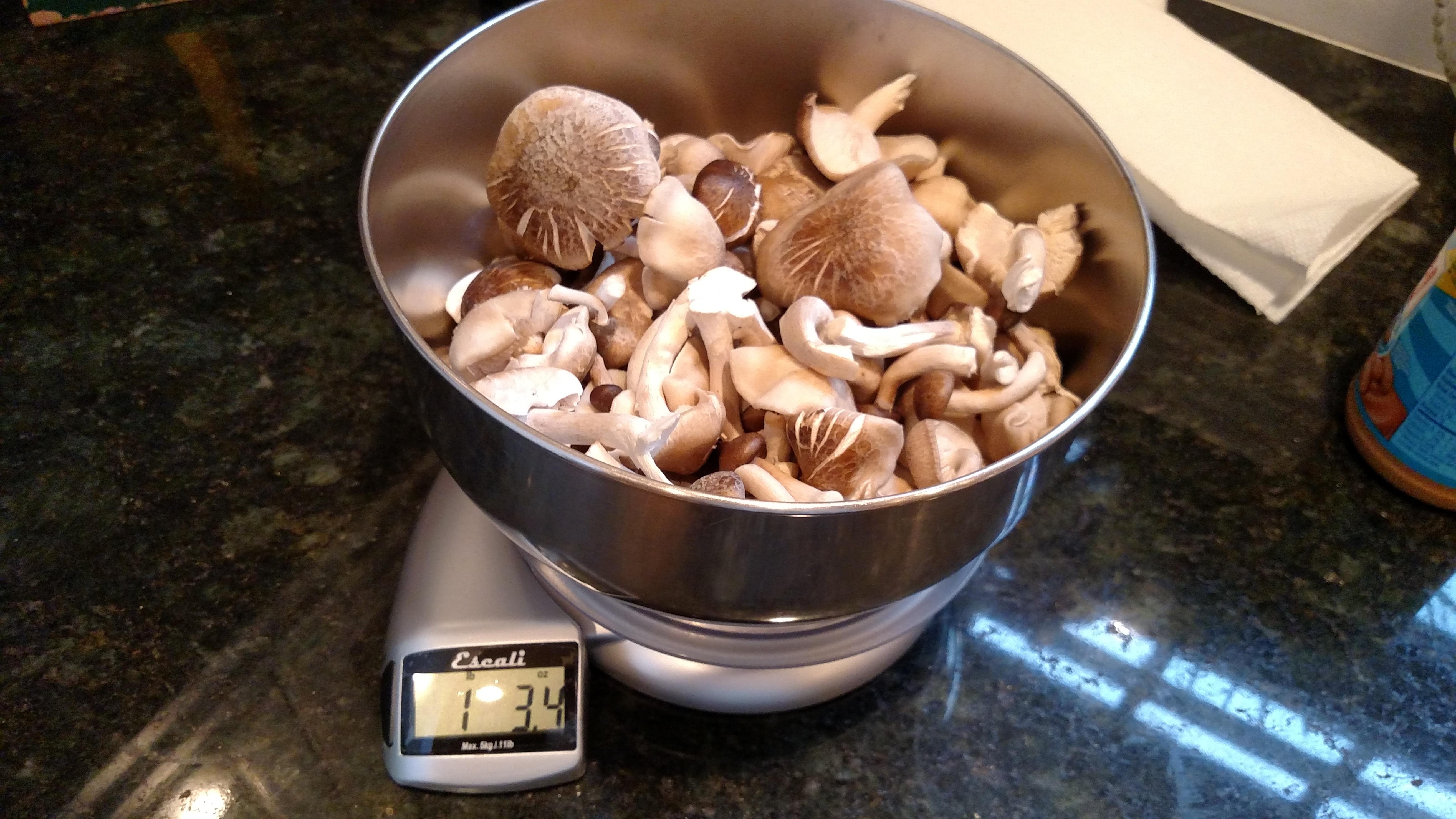 Random edible grow photo thread - Gourmet and Medicinal Mushrooms