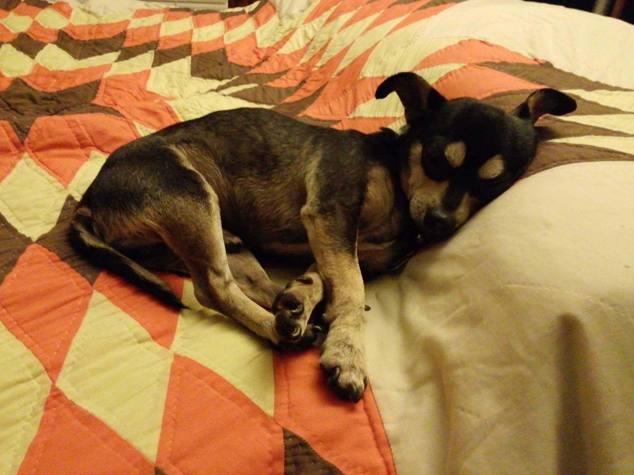 Ghetto Dog Rescue