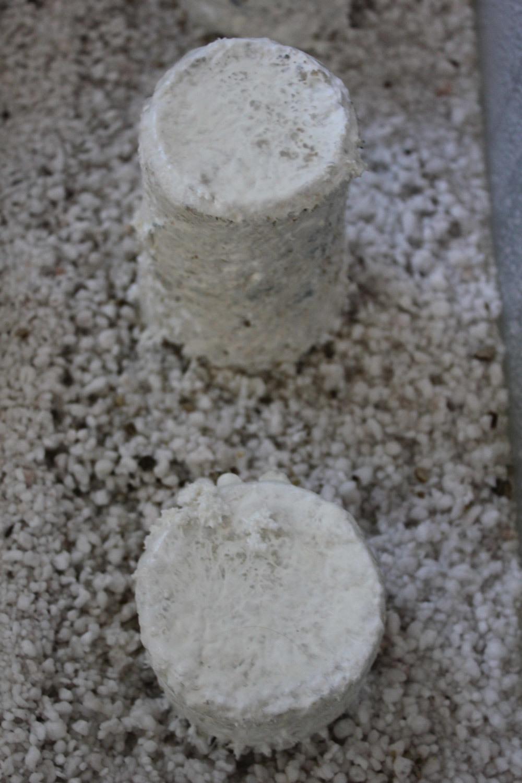 Mushroom Cakes Not Fruiting